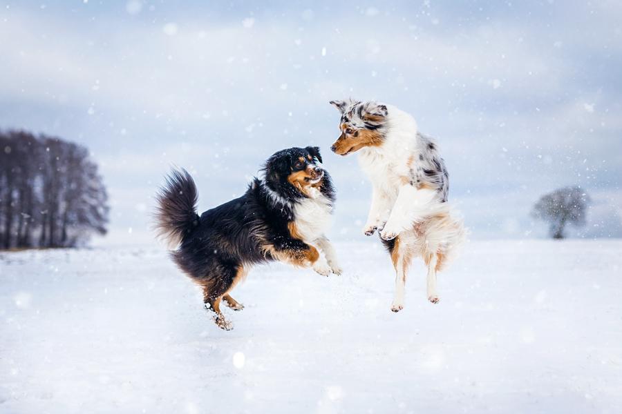 Hundeshooting • Ausgelassen im Schnee