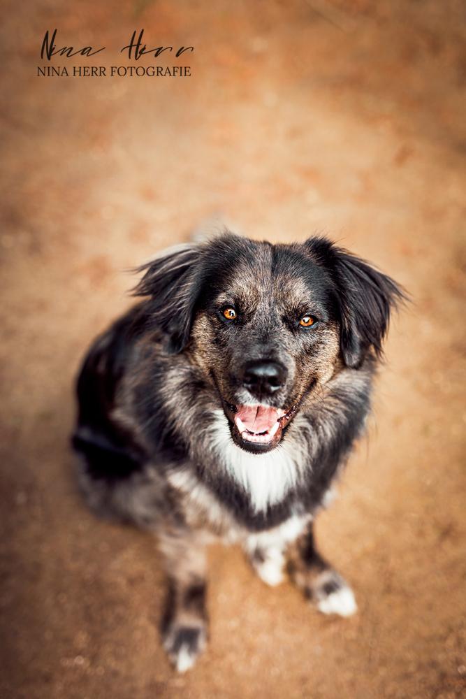 Muro • Frühlingshaftes Hundeshooting in Darmstadt