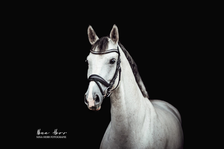 Black is Beautiful • Pferdeshootings vor schwarzem Hintergrund