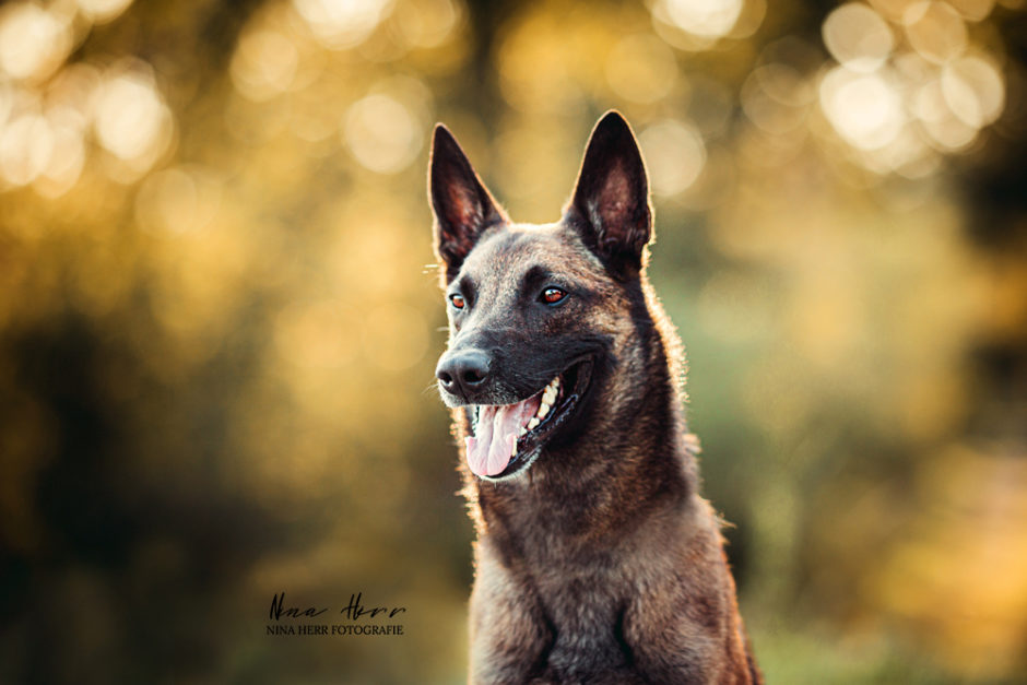 Pacco • Hundeshooting mit dem Energiebündel und Herzenshund