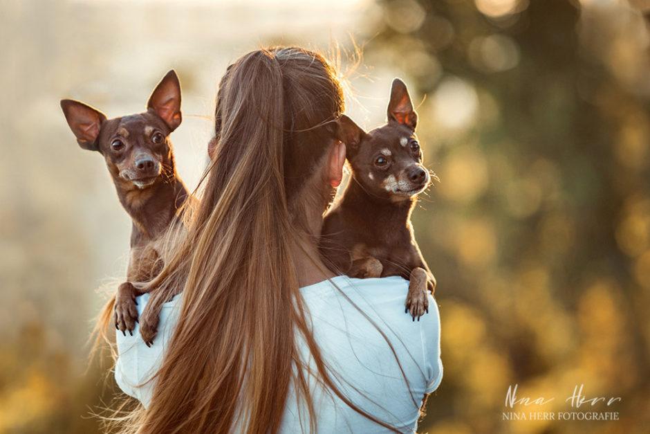 Rasselbande • Hundeshooting in Stuttgart der kleinen Familie