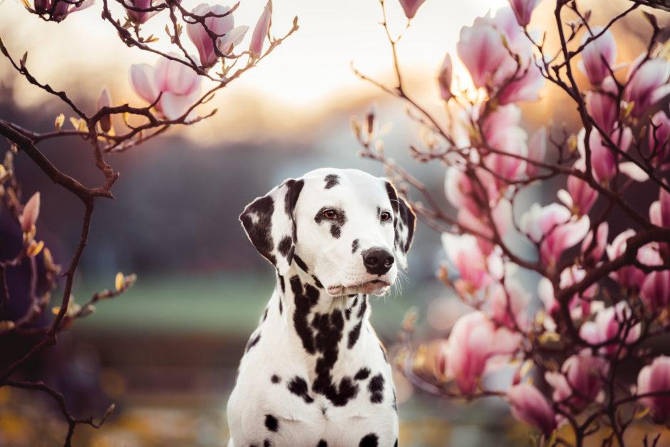 Blütentraum • Hunde Fotoshooting in Stuttgart