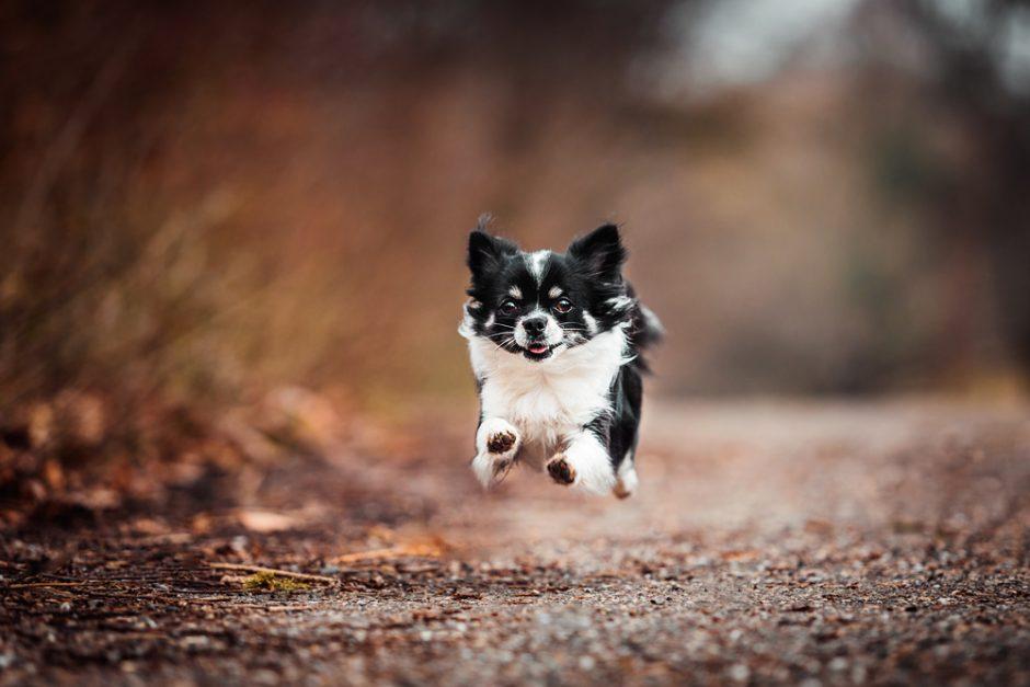 Shiva und Charly • Hundeshootings