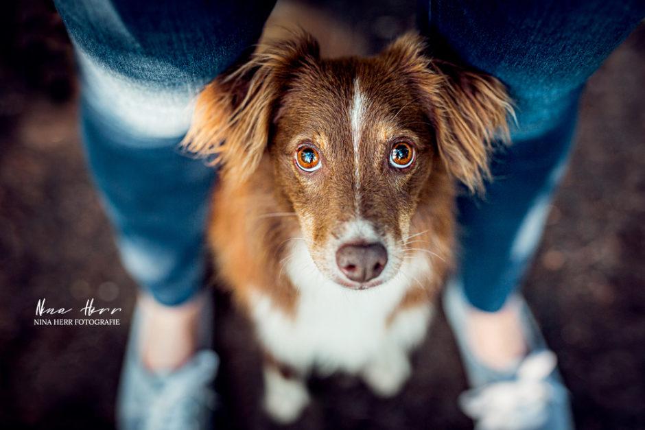 Mira • Fotoshooting mit der (Hunde-)Wasserratte am See