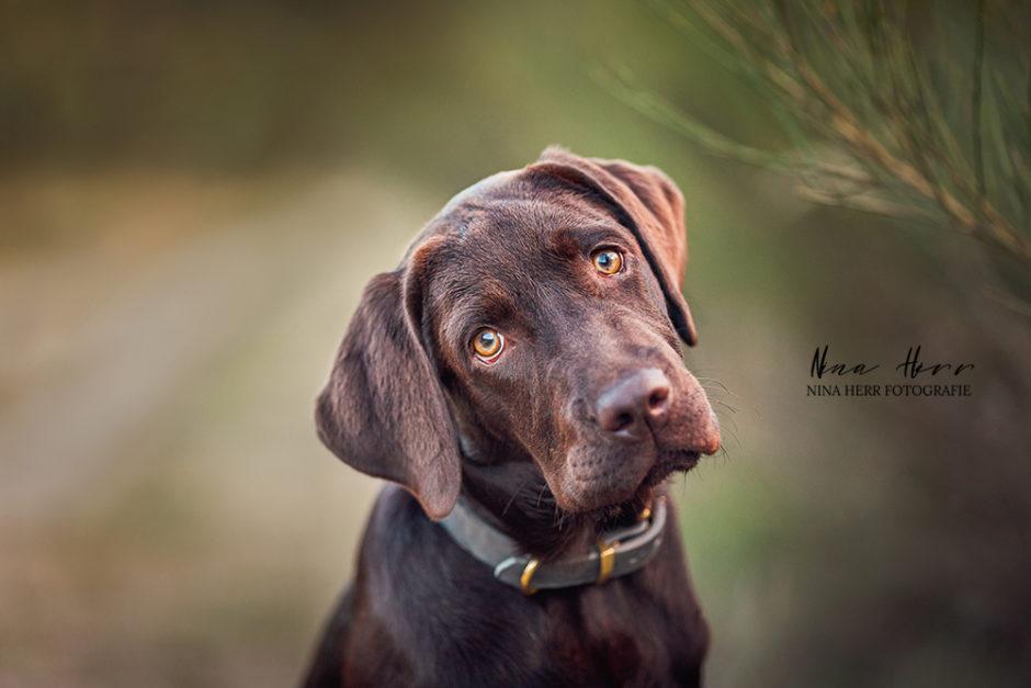Hundefamilie • Labrador Hundeshooting in Darmstadt